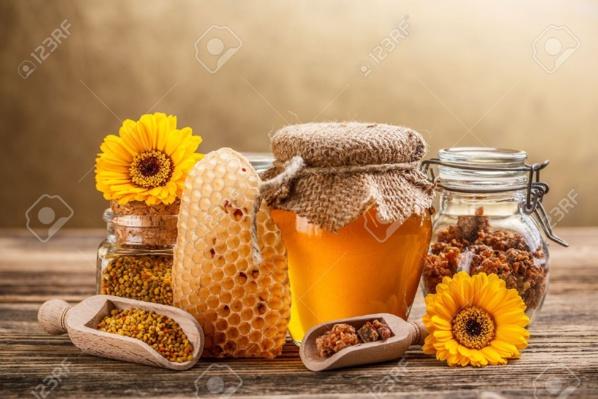 Vers la création d'un club national des acteurs opérant dans l'élevage des abeilles en Mauritanie