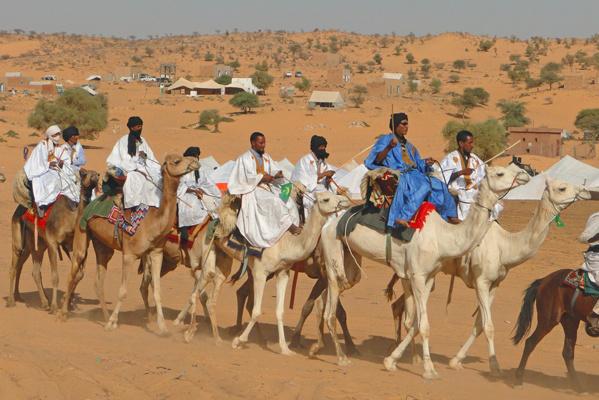 Les chameaux de Mauritanie en route pour Touba