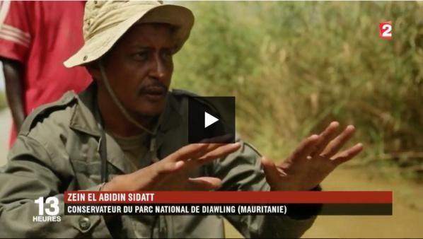 Mauritanie : une mauvaise herbe qui vaut de l'or