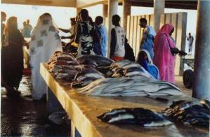Nouveaux investissements dans le marché aux poissons de Nouakchott