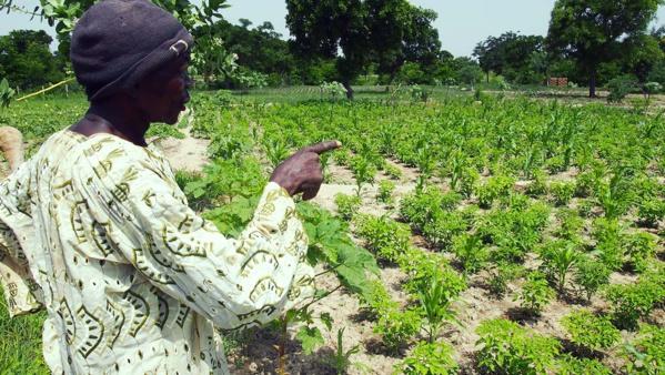 Le CILSS la CEDEAO satisfaits de leur production agricole