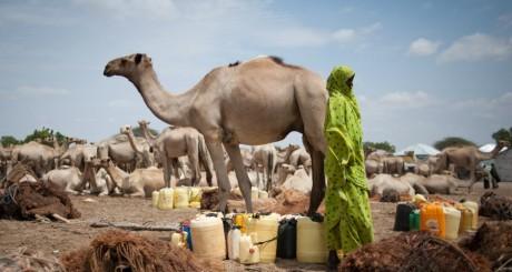 ROSA et SUN-Mauritanie inquiets face à la situation sylvo-agro-pastorale et nutritionnelle en Mauritanie