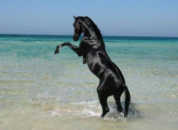 Organisation d'une course de chevaux à l'occasion de la journée nationale des sports