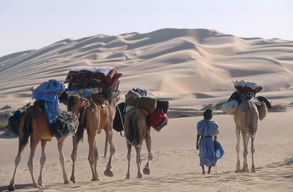 La Mauritanie va exporter des chameaux en Libye