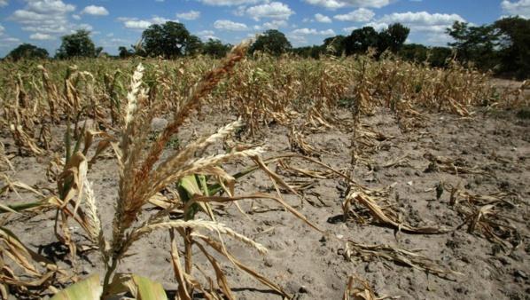 Mauritanie: l'inquiétude des agriculteurs face à la grave sécheresse