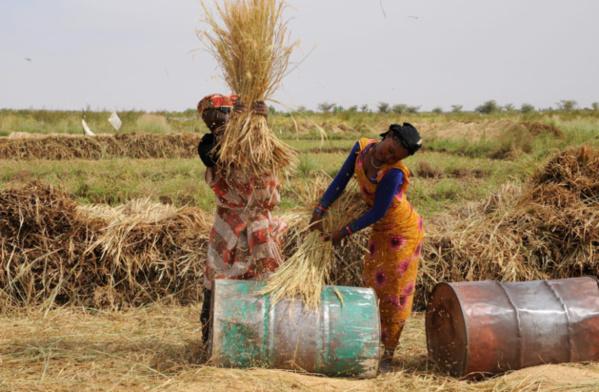 Campagne agricole estivale : accès à l'irrigué, à l'encadrement et à la vulgarisation agricoles