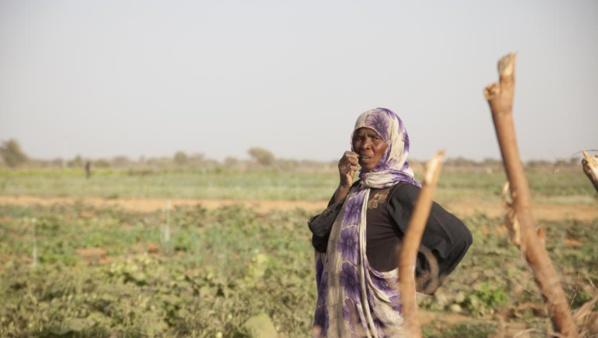Mauritanie: la sécheresse fait des morts à l'Est du pays