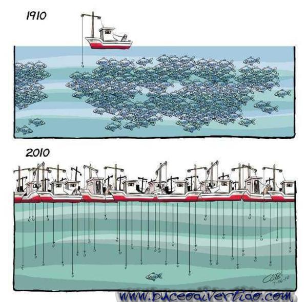 Mauritanie : un million de tonnes de pélagiques capturées par an
