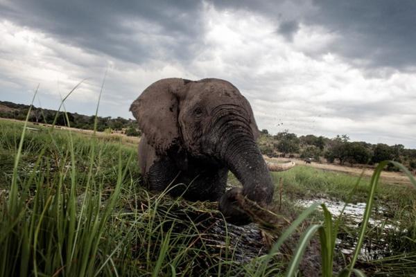 Boudée par les touristes, l'Afrique cherche à leur faire les yeux doux