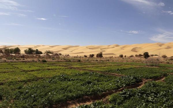 Lancement de la campagne agricole au niveau de la moughataa d'Aoujeft, en Adrar
