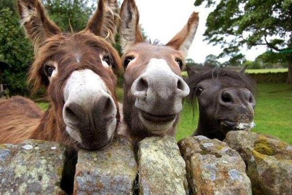 Oualata : les journalistes moins bien traités que la course des ânes