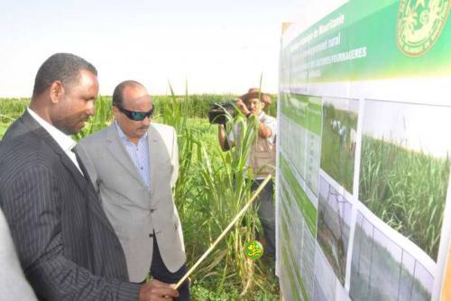 Le Président de la République visite un périmètre agricole pilote pour la culture des fourrages verts à N'Beikit Lahwach