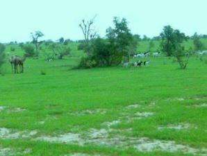 Hivernage tardif et grosse peur chez les éleveurs