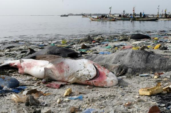 La protection des espèces marines monte en puissance