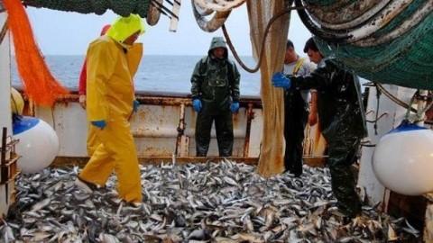Bientôt un Code pour la pêche continentale et l'aquaculture