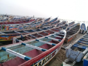 Grosse colères des pêcheurs artisanaux contre la direction du marché au poisson