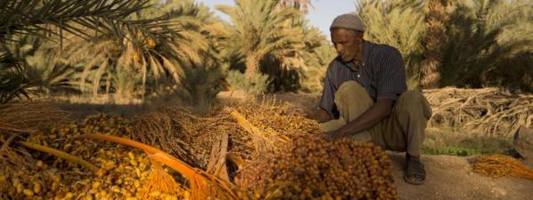 "Mauritanie : une mesure qui fera ""datte"""