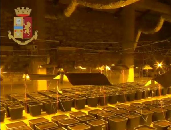 Italie: une plantation de marijuana cachée derrière...une cabine de douche
