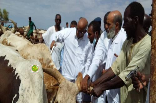 Démarrage de la campagne nationale de vaccination du cheptel au niveau de la wilaya du Hodh El Gharbi