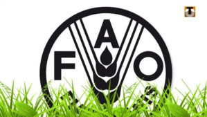 La ministre de l'environnement s'entretient avec la représentante de la FAO