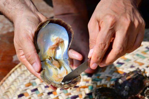 Au large des Emirats, l'ancienne passion des perles perdure