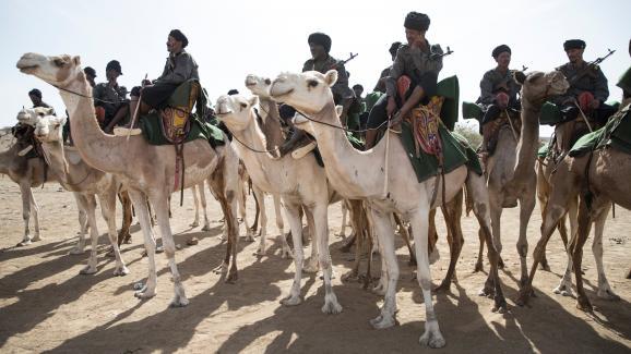 250 chameaux de l'UE pour l'unité méhariste en Mauritanie