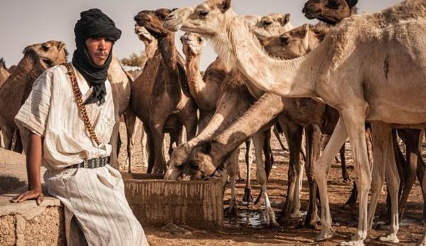 Le programme agropastoral : le Guidimakha en tête des quotas octroyés aux wilayas