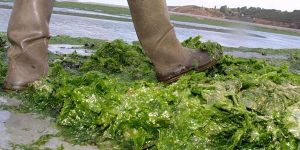 Mauritanie: une micro-algue fait son apparition dans les eaux côtières de Nouadhibou