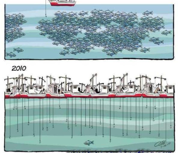 Pêche : « Un secteur en grand danger », selon un opérateur