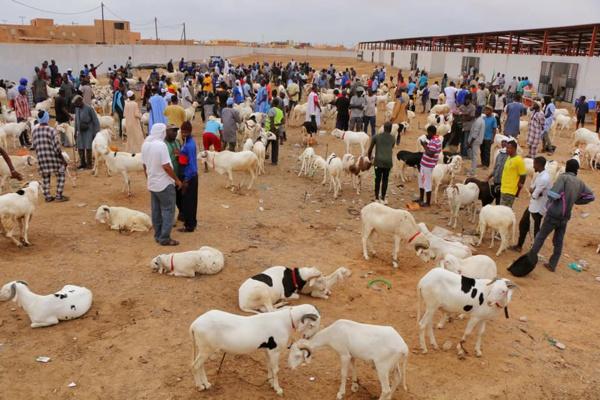 Tabaski : Un marché spécialement aménagé pour les vendeurs de moutons