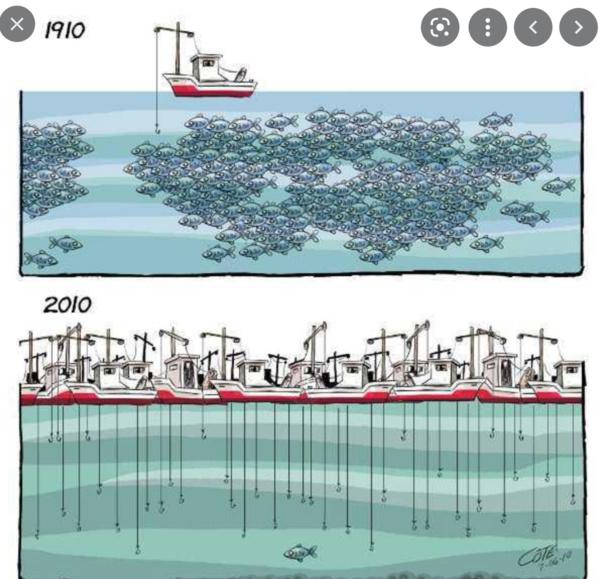 Visioconférence sur la transparence dans le secteur des pêches en Mauritanie