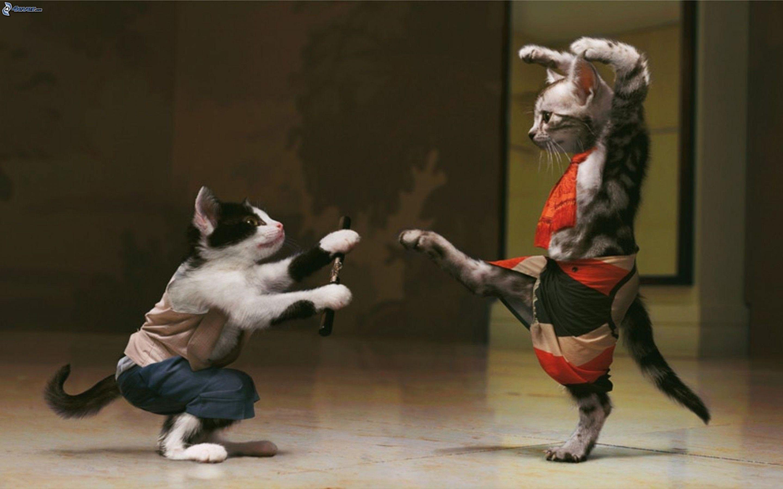 Remise de la première édition de la coupe du ministre de la Jeunesse et des Sports du Kung Fu Wushu