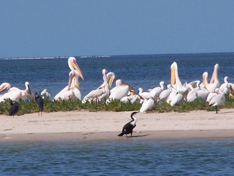 Tasiast contribue à l'assainissement du Parc National du Banc d'Arguin en Mauritanie