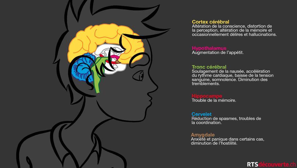 Incinération de quantités de drogue et de produits psychotropes