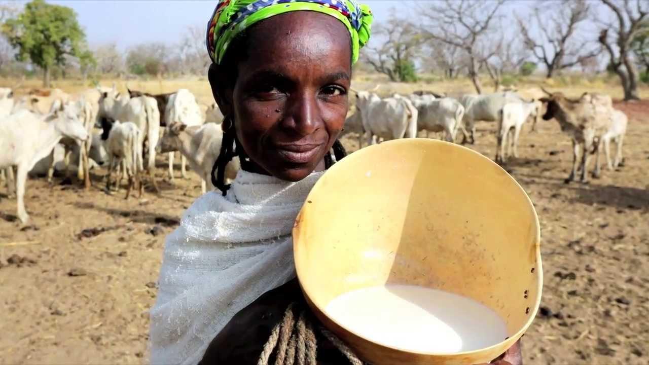 Lancement de la campagne « Mon lait est local »