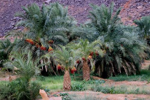 La Gueitna en Adrar : saison culturelle et touristique et créneau de développement local