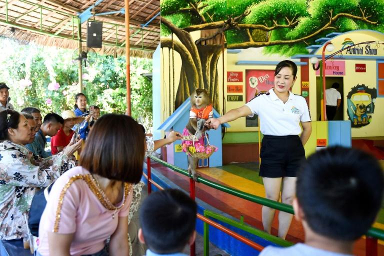Accueil Actualités  Vietnam: sur l'île aux singes, le sourire des touristes, la grimace des défenseurs des animaux