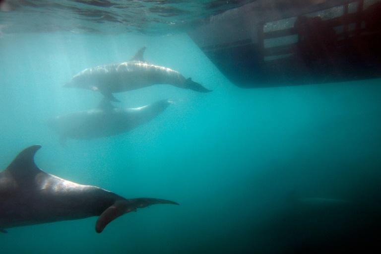 Chats, dauphins et corbeaux: l'histoire secrète des animaux espions de la CIA