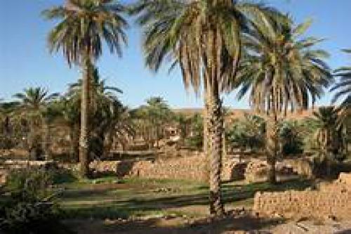 Les coutumes liées à notre phœniciculture inscrites sur la liste du patrimoine mondial