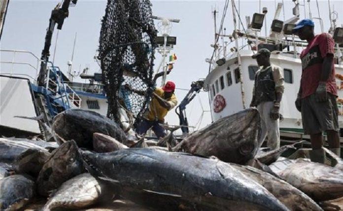 Les cadres du ministère des Pêches et des établissements qui en relèvent contribuent au Fonds national de solidarité
