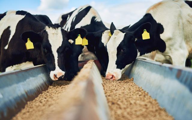 4500 tonnes de blé et 3000 tonnes d'aliment de bétail pour la wilaya du Brakna