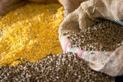 Le wali de Dakhlet Nouadhibou: Les aliments de bétail seront disponible en quantité suffisante