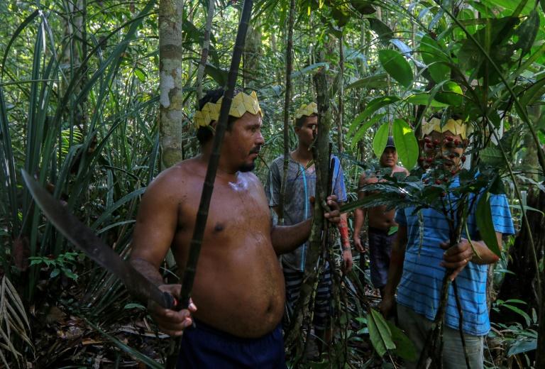 Brésil: chez des indigènes d'Amazonie, des plantes contre le coronavirus