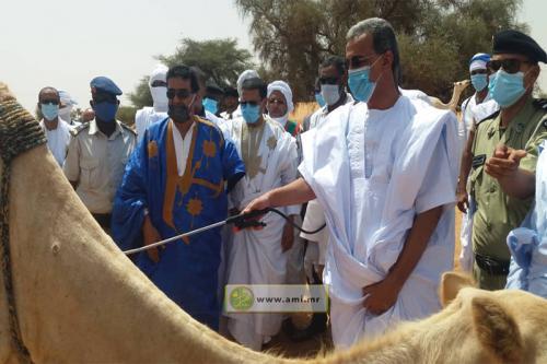 Brakna : Distribution de moustiquaires imprégnées et vaccination contre la pasteurellose caméline