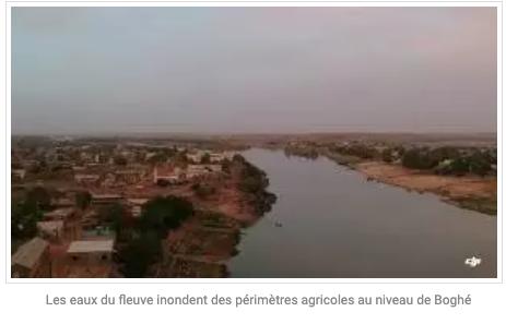 Les eaux du fleuve inondent des périmètres agricoles au niveau de Boghé