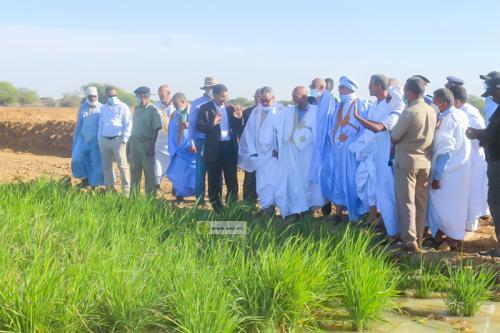 Trarza : Le ministre du Développement rural visite des périmètres maraichers privés dans l'arrondissement de Lekseïba 2