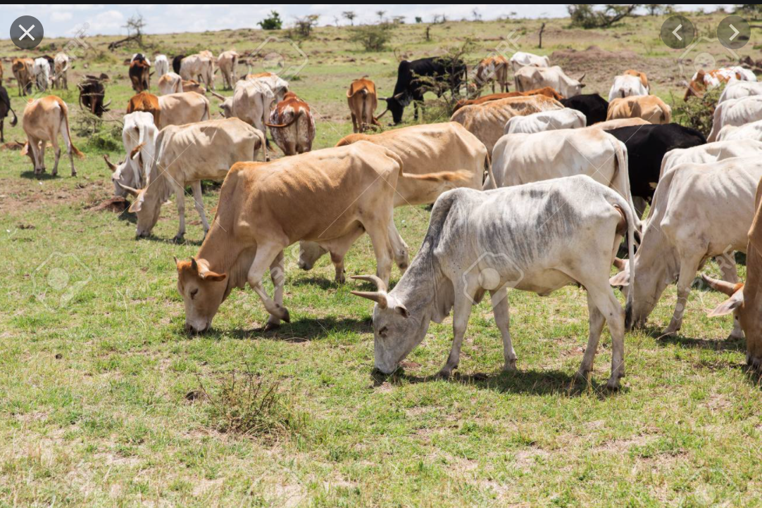 Néma: Ouverture d'un nouveau marché hebdomadaire pastoral