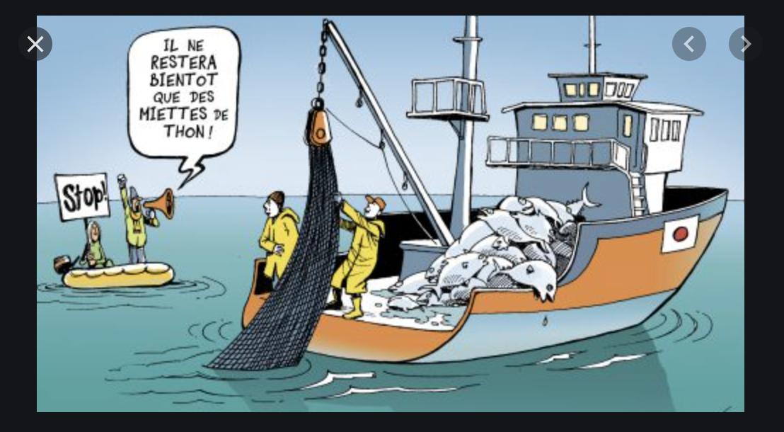 Pêche: Nouvelles mesures relatives aux conditions d'exploitation des petits pélagiques