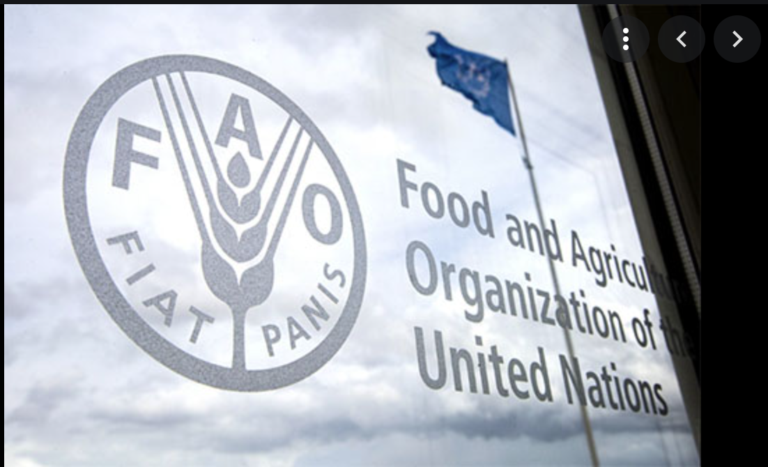 L'élection de la Mauritanie membre de la FAO représentant du Groupe africain reflète les efforts du pays dans le domaine agricole