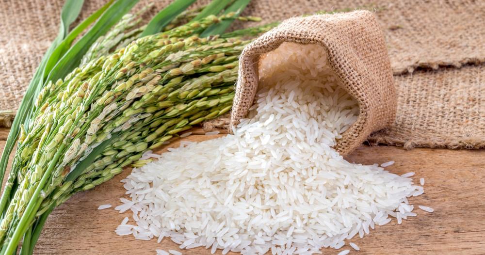 Riziculture: Le Trarza couvre 70% des besoins du pays
